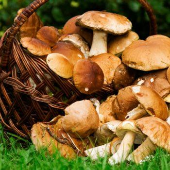 Chasse, pêche, champignons pyrenees orientales